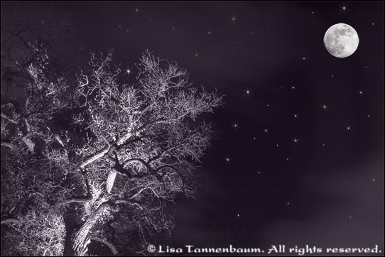 bare tree branches with a full moon,