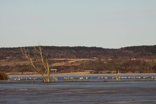 Lake of Hornborga