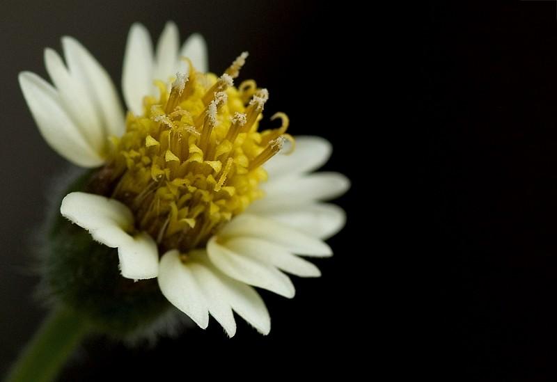 flower bloem macro