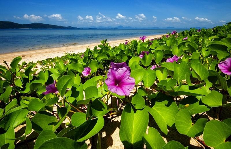 strand beach Koh Samui Thailand