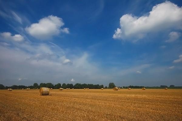 Nieuwstadt Limburg landschap