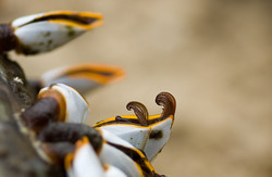shell schelp wrakhout driftwoord