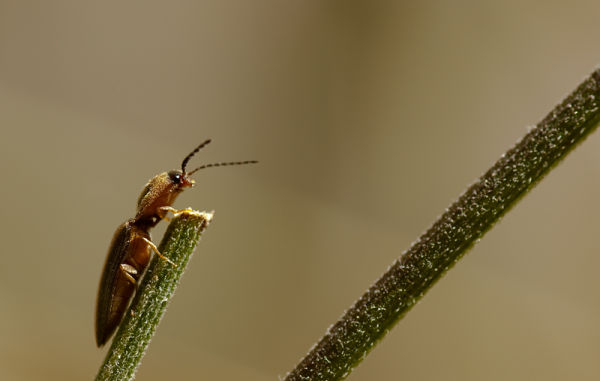 kever bug insect lonely at the top
