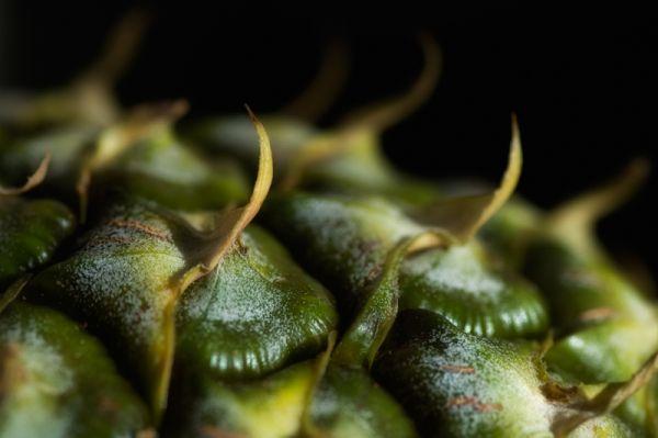 macro pine apple ananas close up
