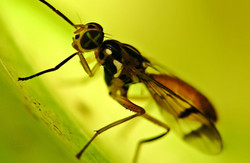 macro fly bright yellow green surrounding