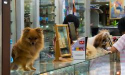 dogs in shop Hat Yai