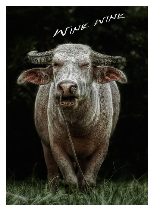 winking water buffalo