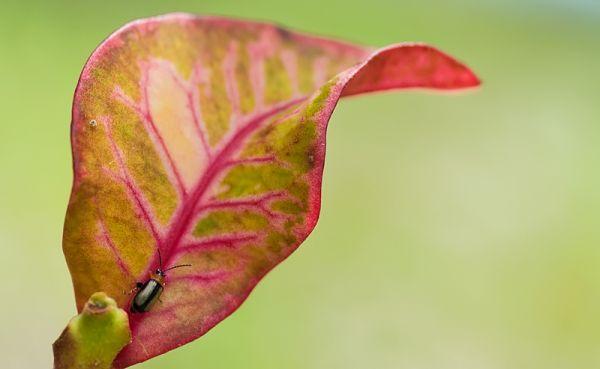 little bug on colorful leaf