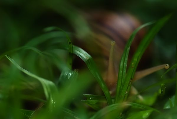 snail in grass