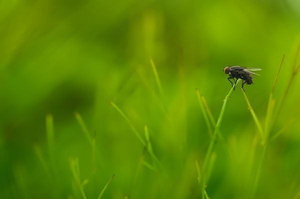 fly in green surrounding
