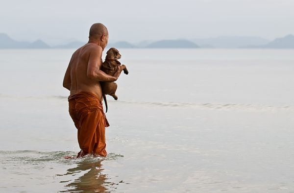 monk washing puppy in the sea