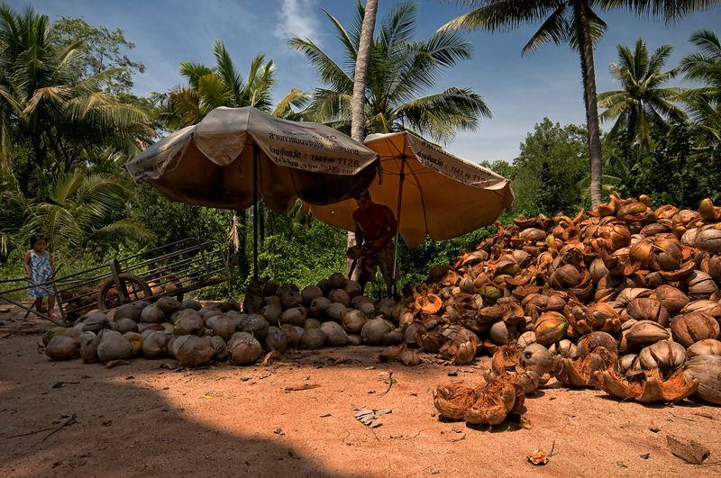 peeling coconuts koh samui