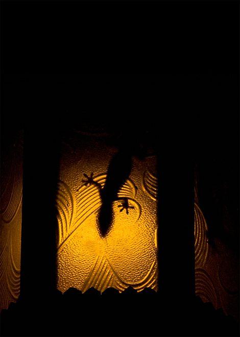house gecko reptile