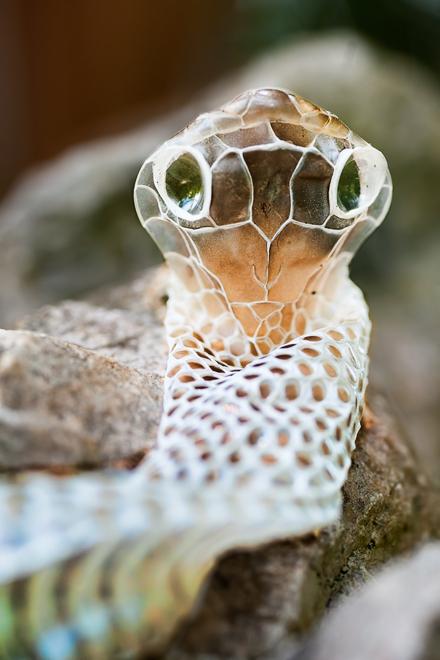 shedded snake skin