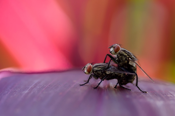 insect macro flies colorful