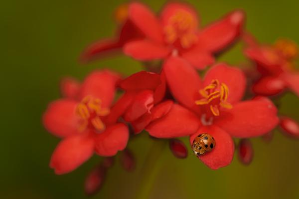 ladybird on shanghai beauty