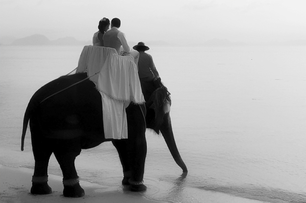 wedding couple on elephant