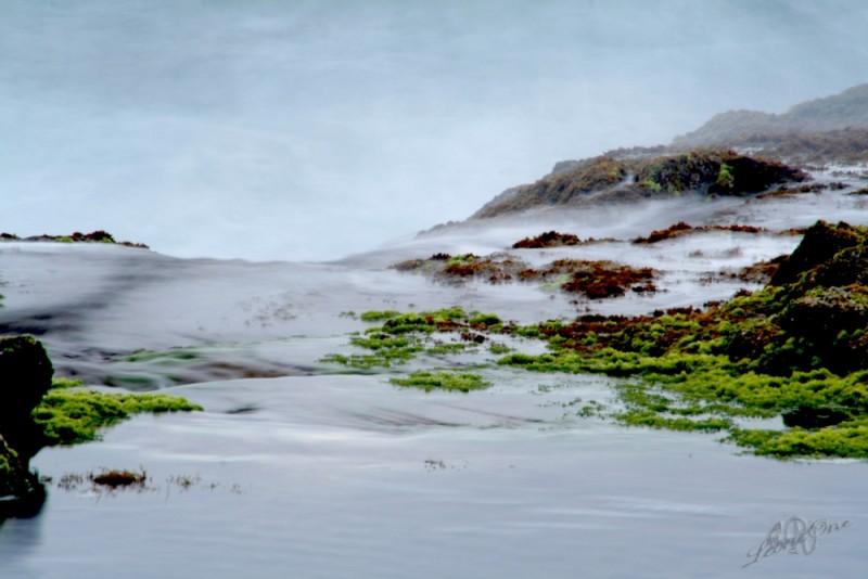 Alta Marea