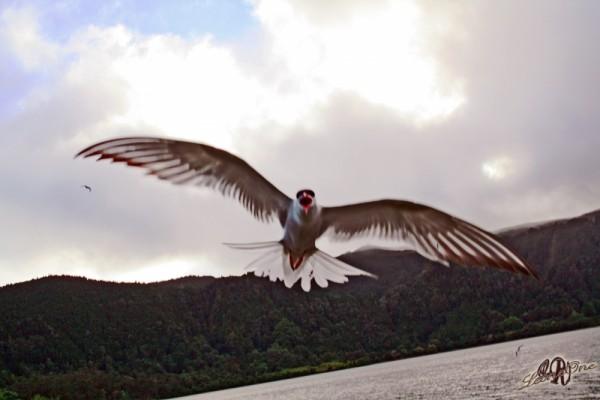 Furnas Açores - Azzorre