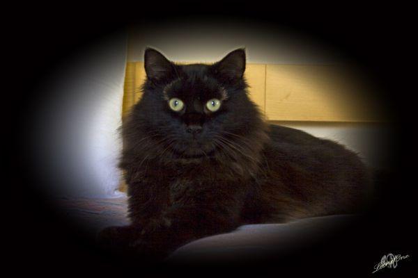 Poldo Cat Gatto