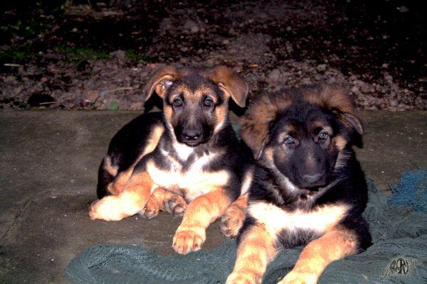 Lillo e Pippo