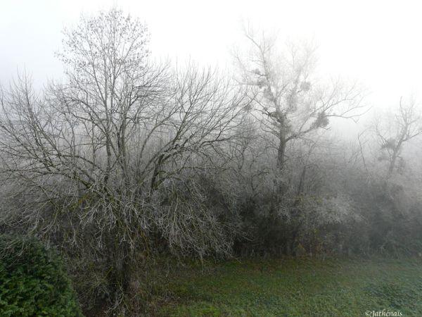 Brouillard givrant (3)