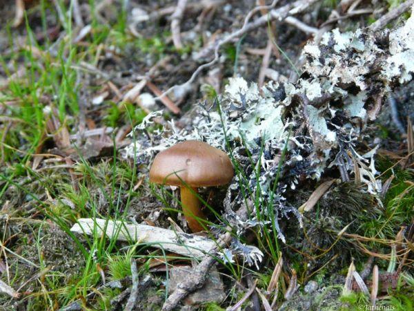 Lichens et champignon