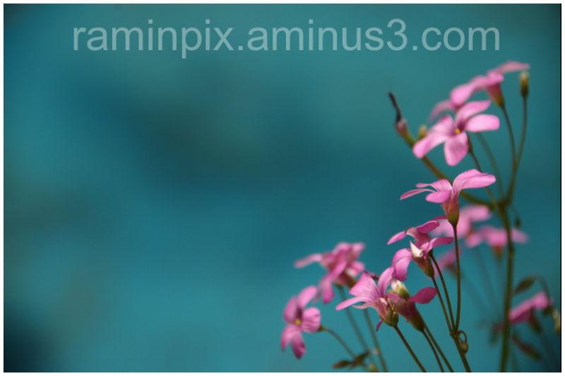 Kashan,plants,nature