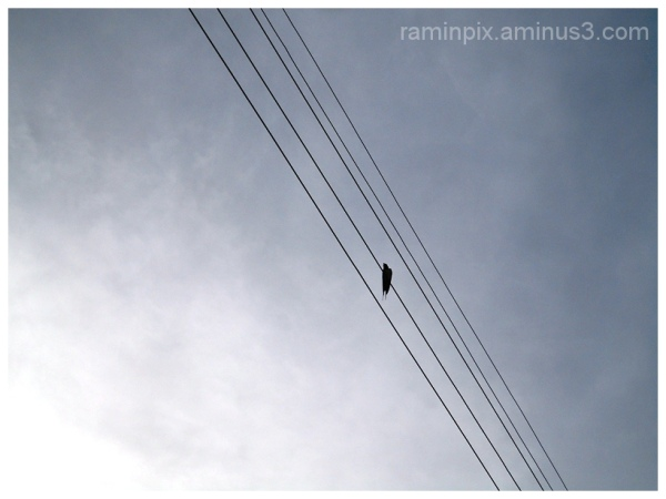 Bird and lines