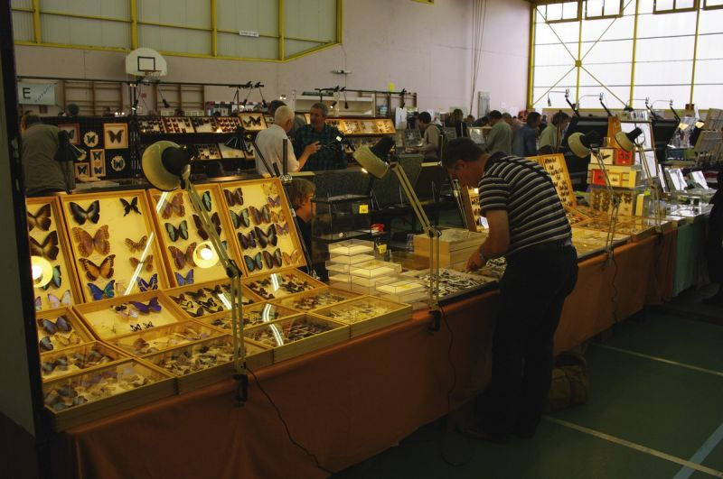 bourse exposition internationale d'insectes