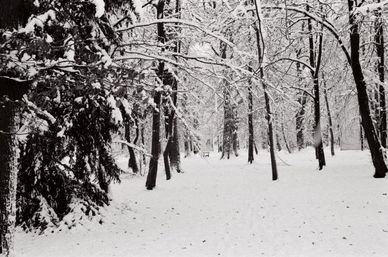 jardin de neige