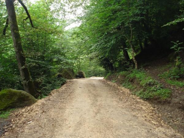 (Ramsar Jungle Road)جاده پارک جنگلی رامسر