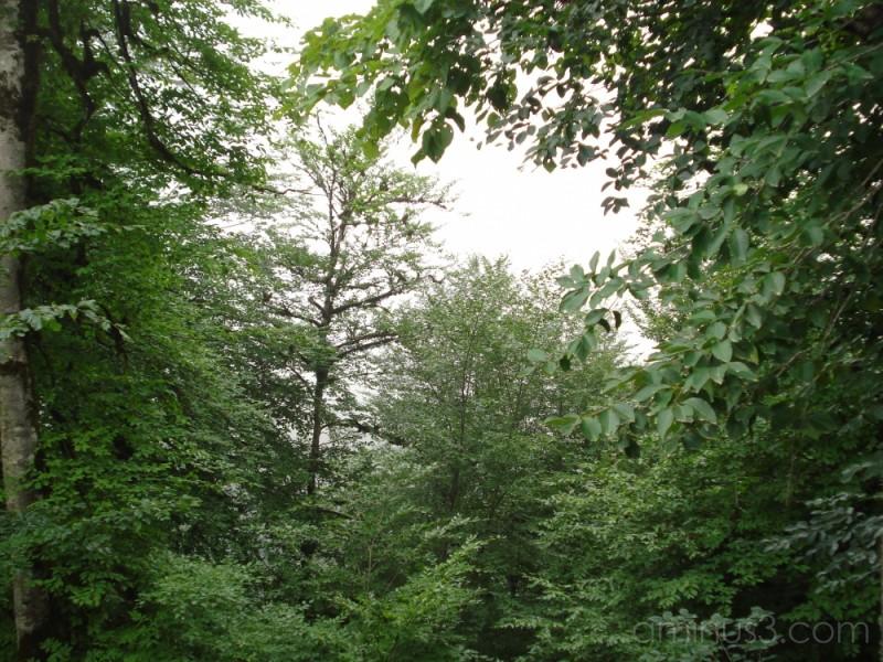 (Vapor & Forest)مه و جنگل در جاده کلاردشت