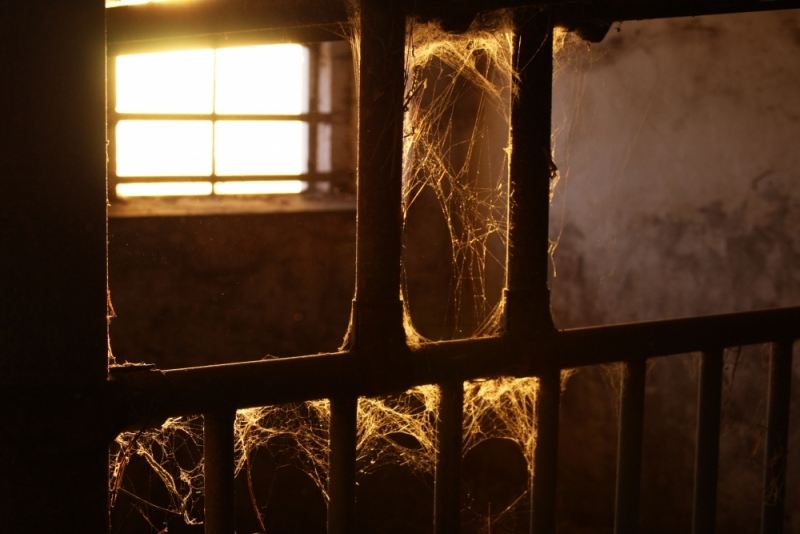 cobweb sunset