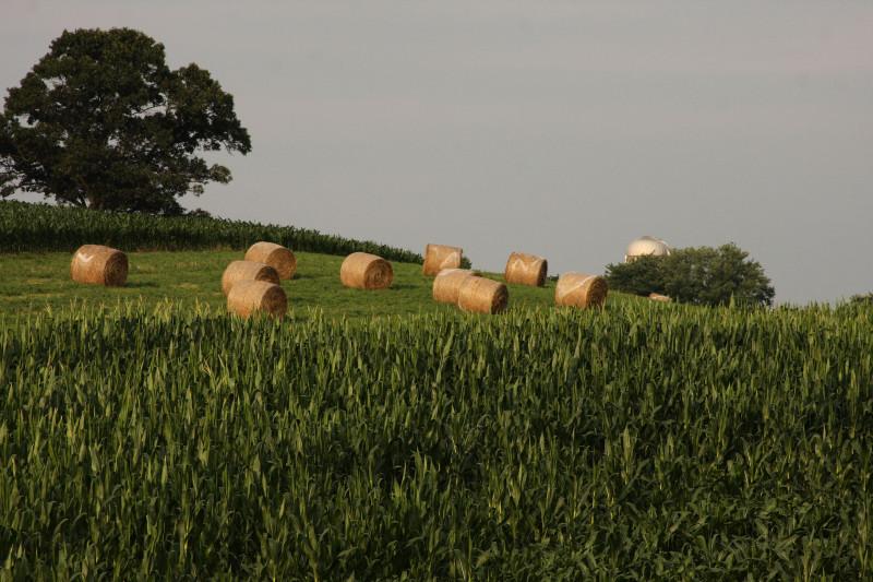 Mid-Summer Bales