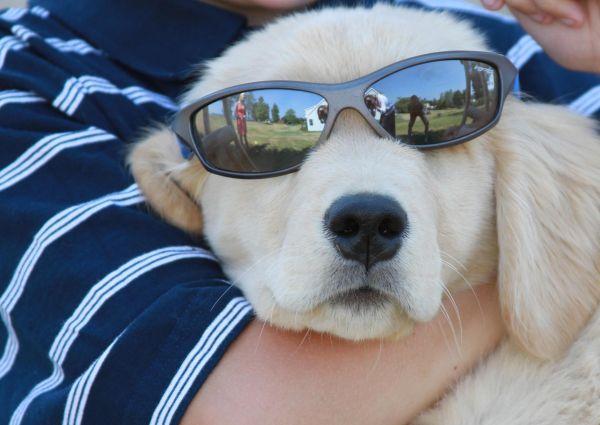 Cool Doggie