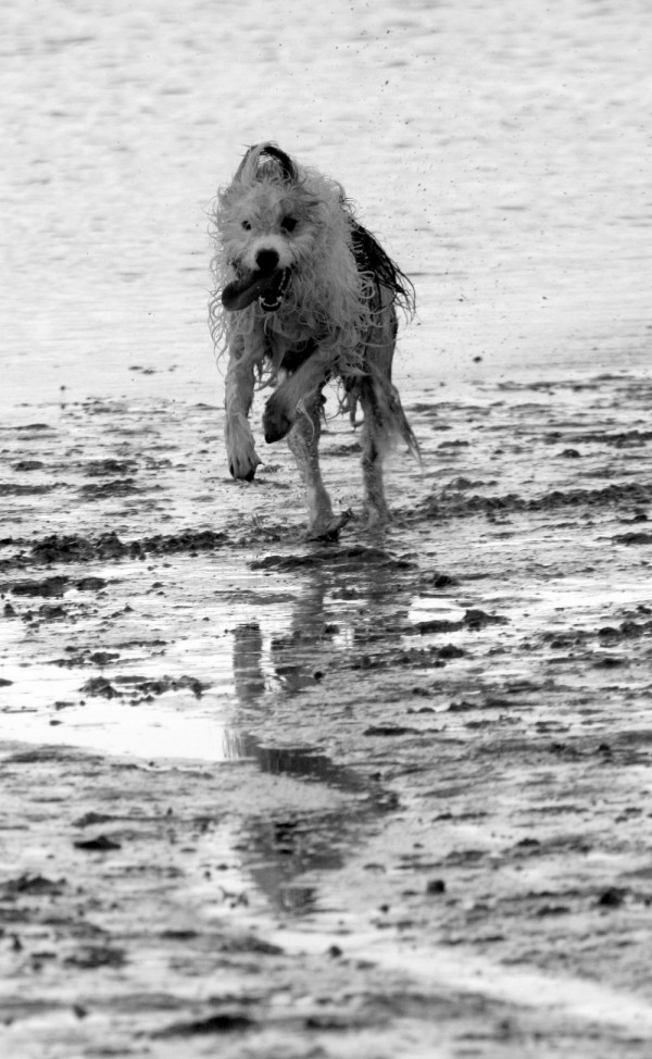 Lolloping Wet Shaggy dog!!