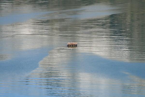 rippled floater