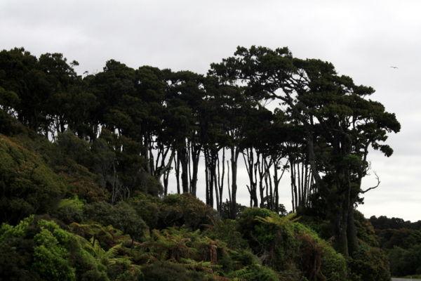West Coast line bush.