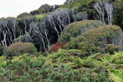 Coast line sweep of bush.