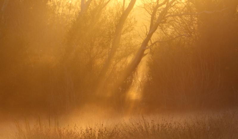 Golden Dawn and mist.