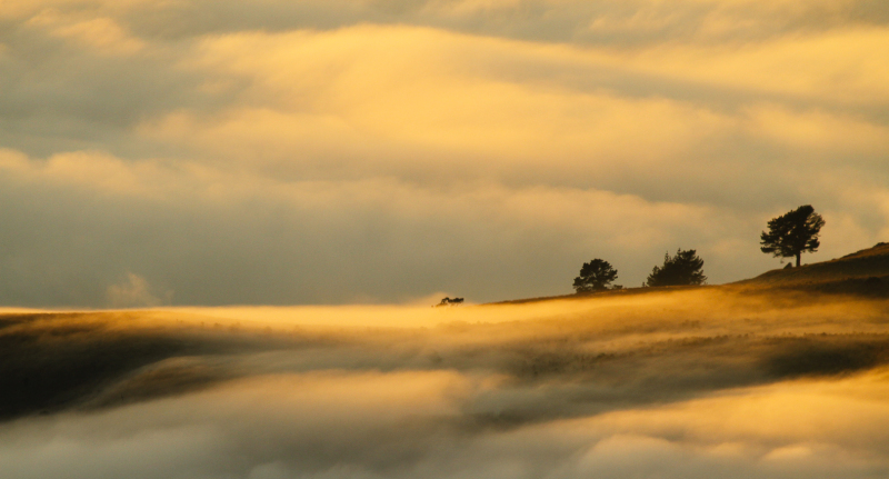 Islands in the mist .2.