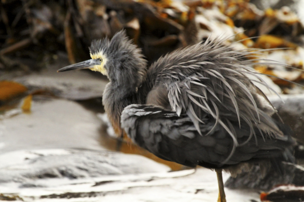 Ruffled feathers- bad hair moment!