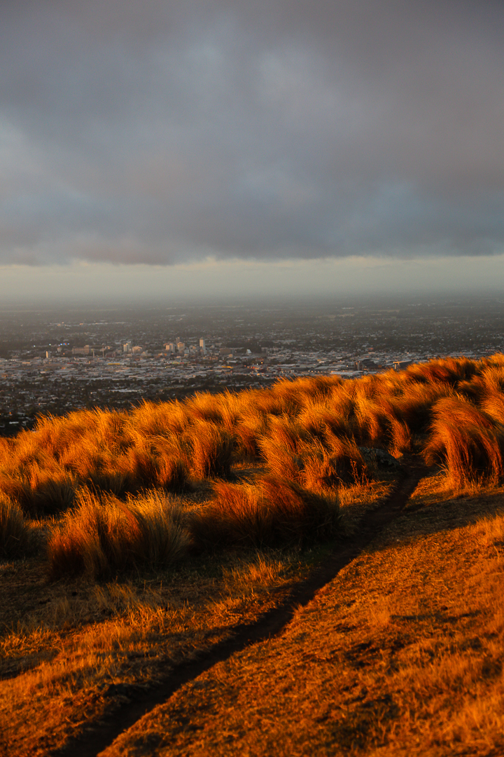 From Tussocks to City