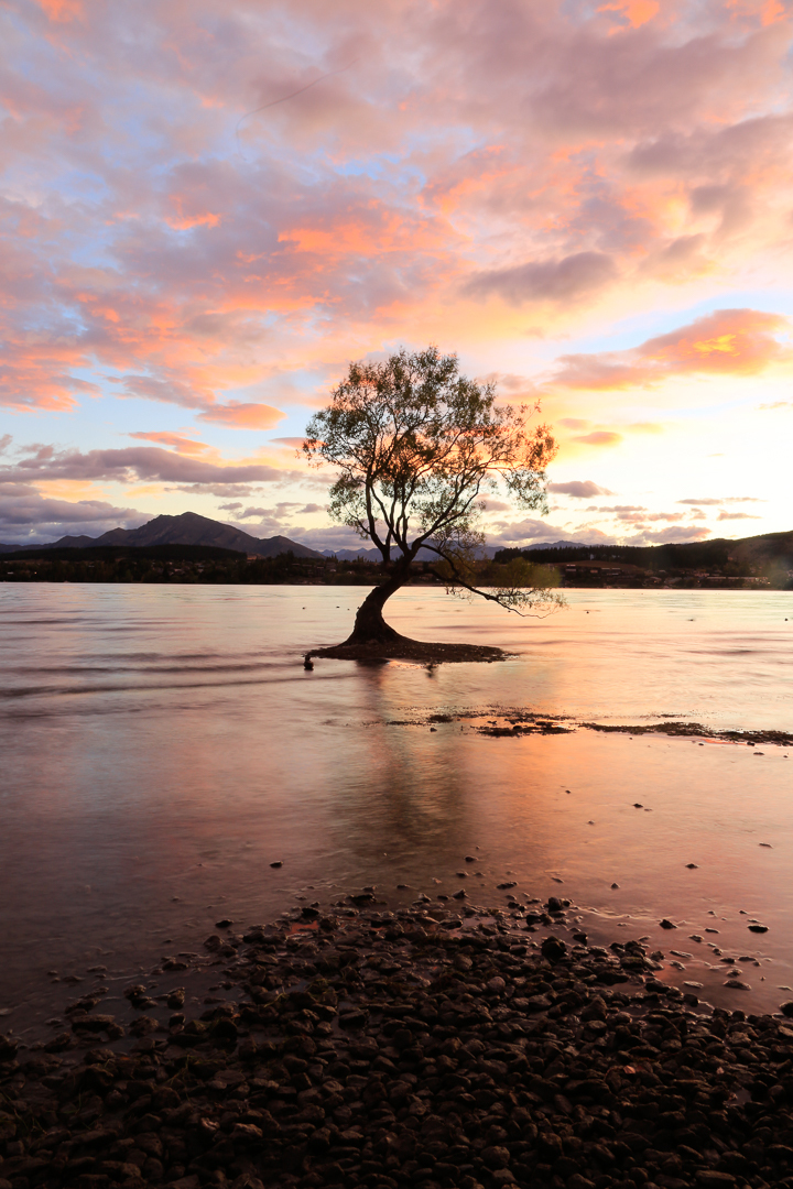 The tree in pink