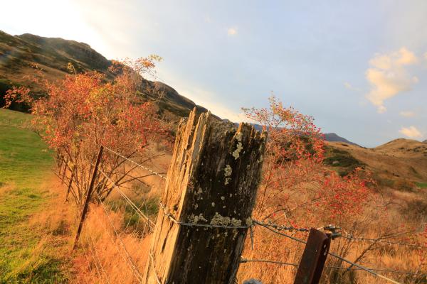 The elderly fence post.