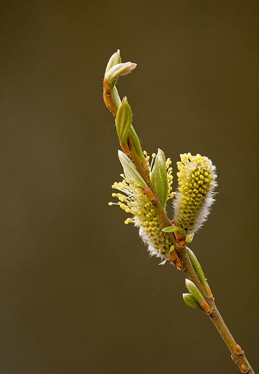 katje, spring, lente