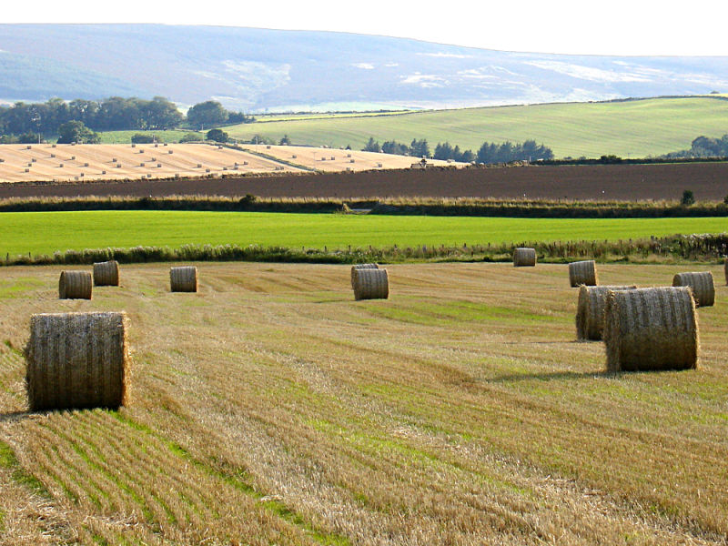 Harvest time in Aberdeenshire