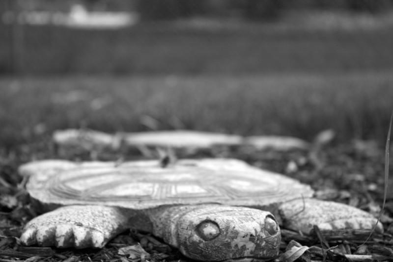 Turtle stepping stone in Liz's backyard
