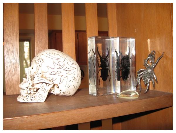 Skull & beetles